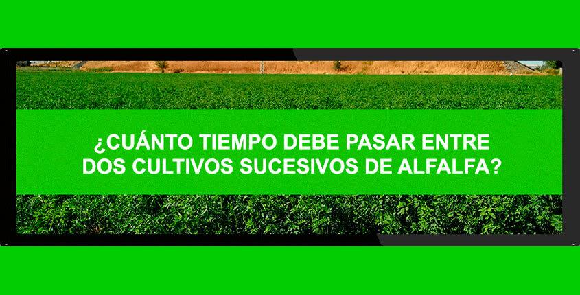 cultivos-de-alfalfa