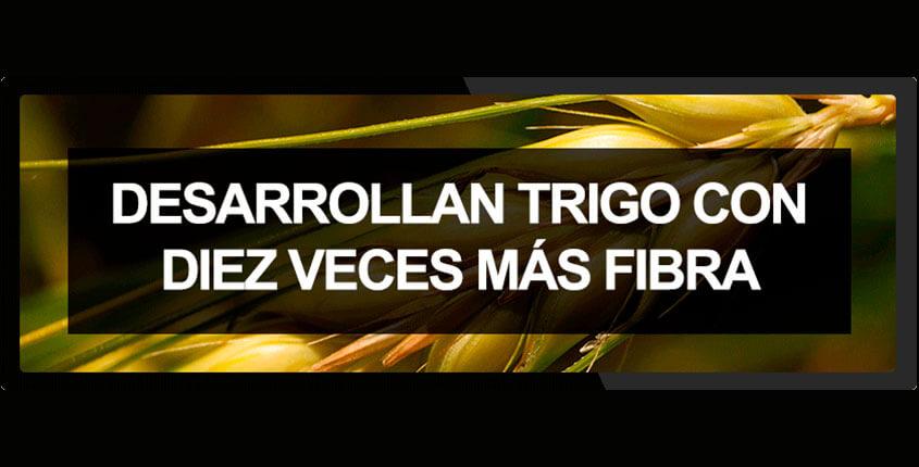 noticia-trigo-fibra